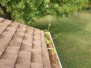Gutter Cleaning Palm Harbor Oldsmar Tarpon Springs