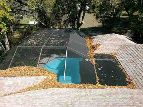 Leaves and debris on pool cage.