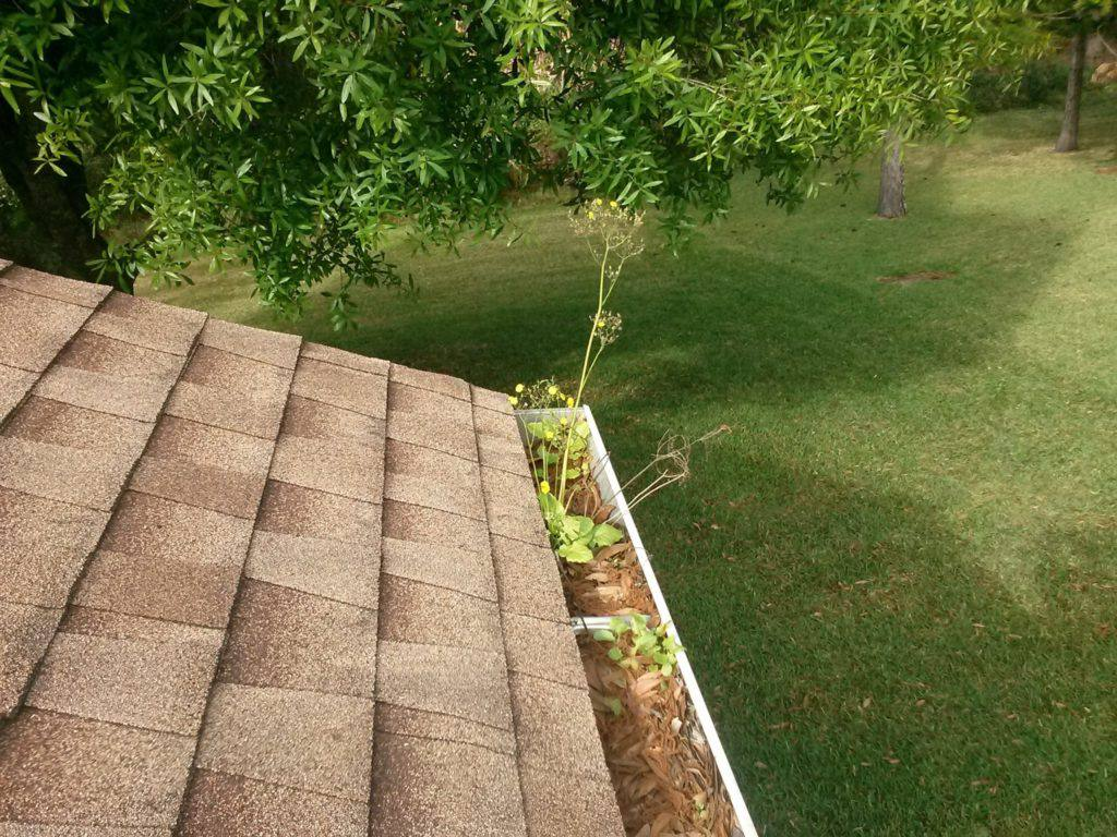 gutter cleaning, new port richey